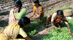 How This Telangana Village Banished Poverty And Farmer Suicides Through Organic
