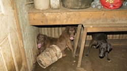 41 Dogs Rescued From 'Deplorable' Conditions At Happy Endings Animal