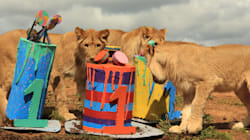 Check Out These Lion Cubs Enjoying Their First