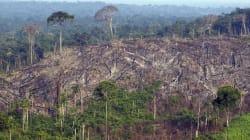 Destruição de floresta volta em forma de projeto de Lei, e com pouca