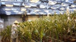 Compra de Monsanto acelera la carrera