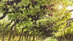 Los viñedos que quizá no sabías que existen en Nueva