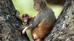 Half Of India's Wildlife May Soon Be Wiped Out, Says WWF's Living Planet Report