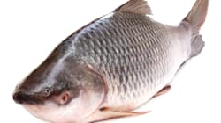 If The BJP Wants To Be The Big Fish In The Bengal Pond, It Should Steer Clear Of All Anti-Fish