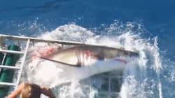 Les images terrifiantes d'un homme piégé dans une cage avec un requin