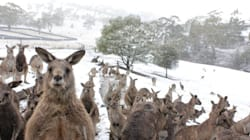 The True Story Behind Australia's Coldest, Angriest