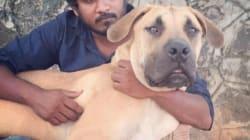 Shravan Krishnan, The Chennai Dog Rescuer, Was Always A