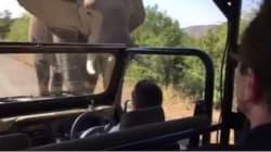 In Elephant Vs Terminator, Arnold Schwarzenegger Came Off Second
