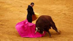 Les Baléares interdisent les corridas avec mise à