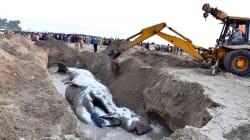 32-Feet-Long Decomposed Dead Blue Whale Discovered On Maharashtra's Murud