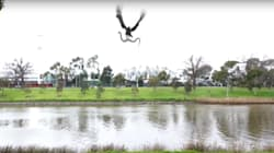 Is This Video Of A Hawk Throwing A Snake At A Family In Melbourne