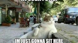 El gato meme ya tiene su