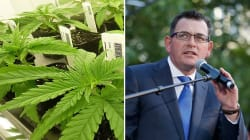 Daniel Andrews Previews His Medical Cannabis