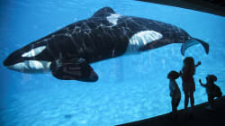 Sea World se rehúsa a liberar a la ballena 'más