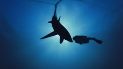WWF Drops $100k To Stop People Shark Fishing On Great Barrier