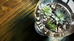 How To Make Your Own Terrarium (And Keep It