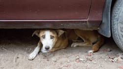 Here Are A Few Things You Can Do To Help Your Furry Friends Cope With The Diwali