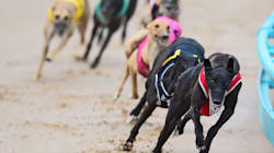 179 Greyhound Trainers And Owners Charged Over Unauthorised Exports To