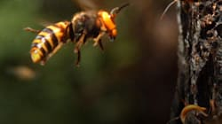 There's A Shortage Of Life-Changing Bee