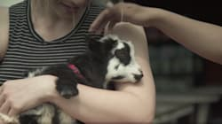 So, Goat Yoga Is A Thing (No, We're Not