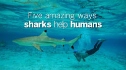5 Amazing Ways Sharks Help