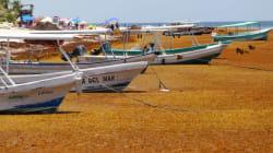 Quintana Roo podría enfrentarse a un desastre ecológico por