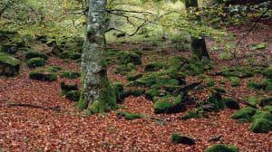 Siete bosques mágicos que visitar este otoño sin salir de