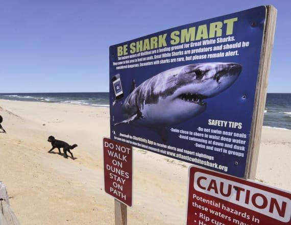 Shark bites 8-year-old boy off North Carolina coast