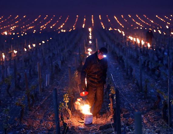 Sharp frosts damage French wine production