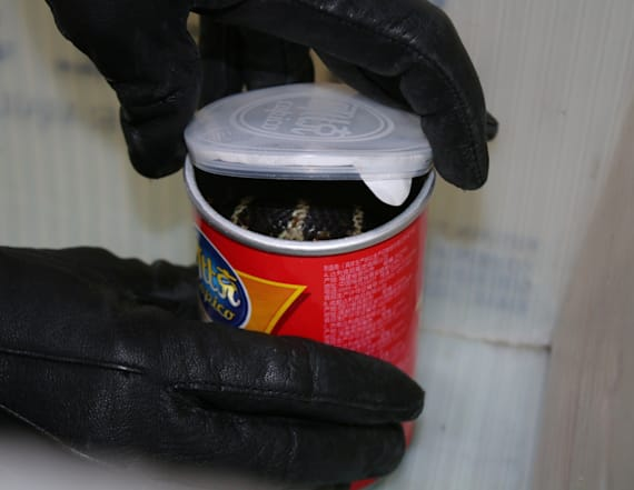 Man accused of smuggling king cobras in chip cans