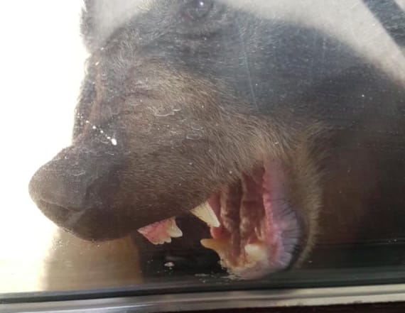 Bear terrorizes family, leaves after getting punched