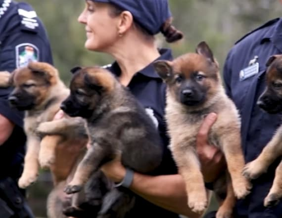 People are being challenged to name 7 police puppies