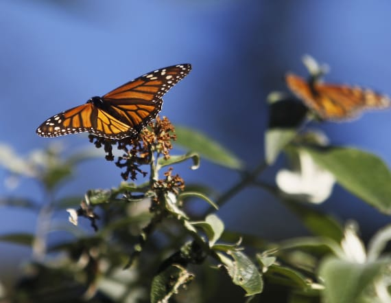 Butterfly sanctuary tries to fight border wall