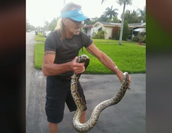 Man wrestles massive python to protect his dog