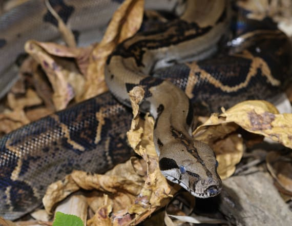 Woman manages to call 911 during snake attack