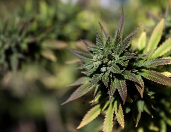 Poll: Majority of Americans support legal marijuana