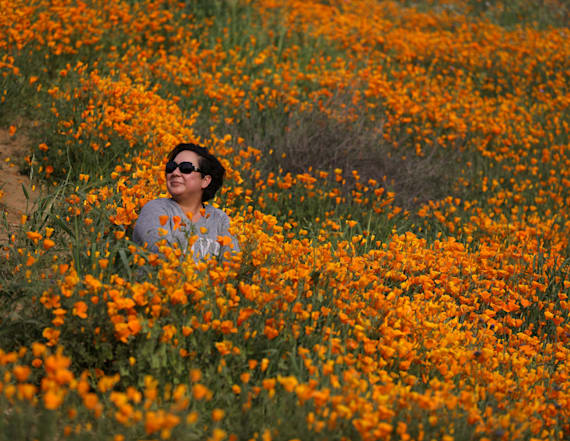 California desert blooms as drought comes to an end