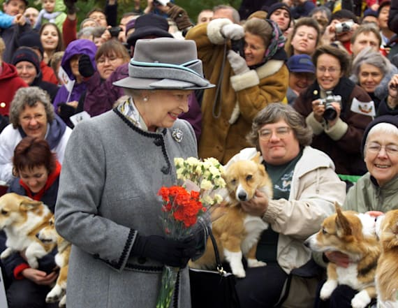 Real reason Queen Elizabeth has owned so many corgis
