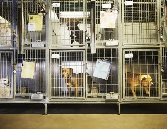 Animal shelter celebrates empty kennels with video