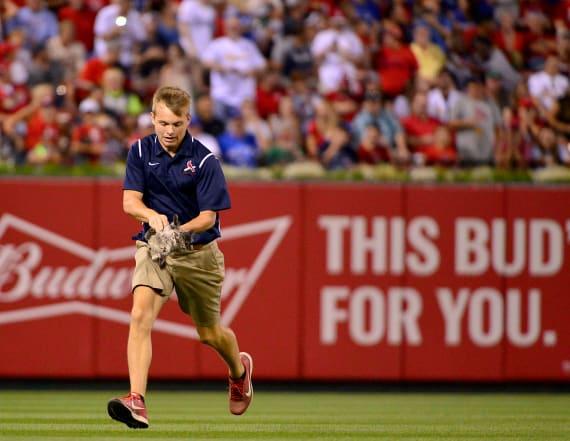 MLB team trying to win custody of lucky 'Rally Cat'