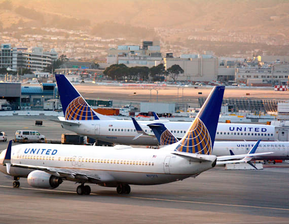 United Airlines pauses cargo-hold pet transport