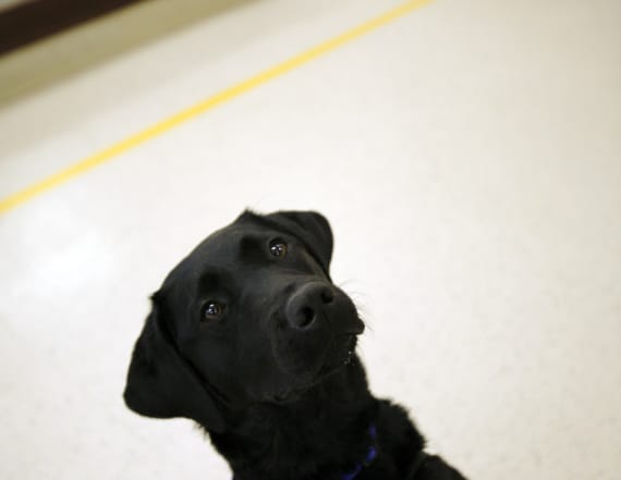 Teen's service dog gets his photo in the yearbook