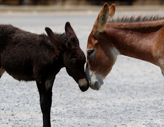 Orphaned by war, donkeys make comeback in Cyprus