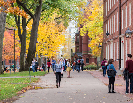 Most popular majors at ivy league schools