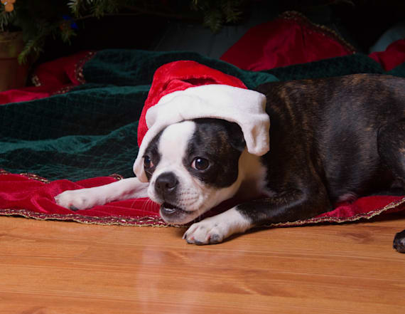 Dog 'arrested' for decapitating Christmas elf