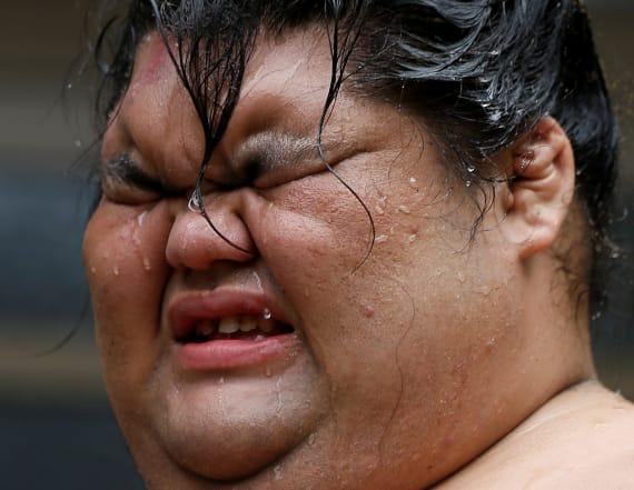 Gain rare insight into the intricacies of sumo