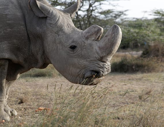 Zoo donates white rhino eggs to save species
