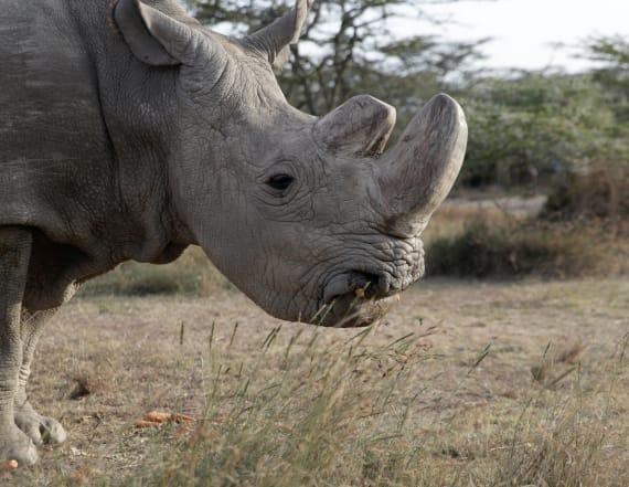 Zoo donates white rhino eggs to save species