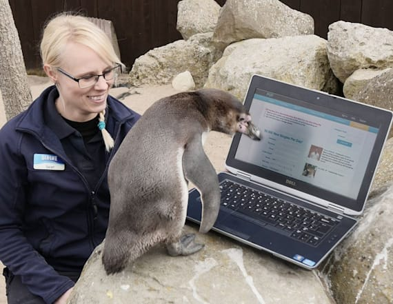 Penguin tries to find love on dating site