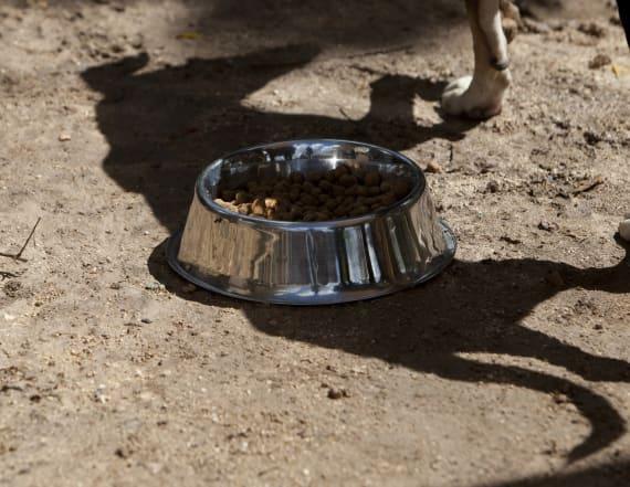 17 dogs, 11 dog skulls found at dog-fighting ring